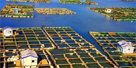 افزایش قابل توجه واردات دانه سویا توسط چین
