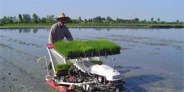 افزایش حجم تجارت جهانی برنج علیرغم کاهش نسبی سطح تولید در سال زراعی 2017/18