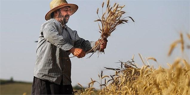 افزایش تولید گندم ایران متوقف شد