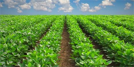 سهم ناچیز کشاورزی از تولید ناخالص ملی