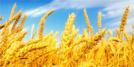 ایران ۳۵ هزار تن گندم به عمان صادر کرد