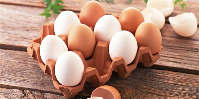آخرین قیمت تخم مرغ در بازار
