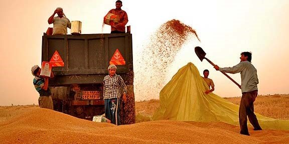 تاخیر در پرداخت مطالبات گندمکاران پای دلالان را به خرید گندم باز کرد