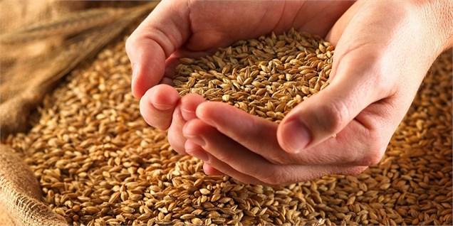 پیش بینی کاهش ۸ درصدی تولید گندم