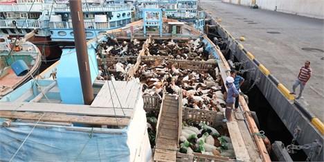 وزارت جهادکشاورزی افزایش قیمت گوشت گوسفندی به دلیل صادرات را رد کرد