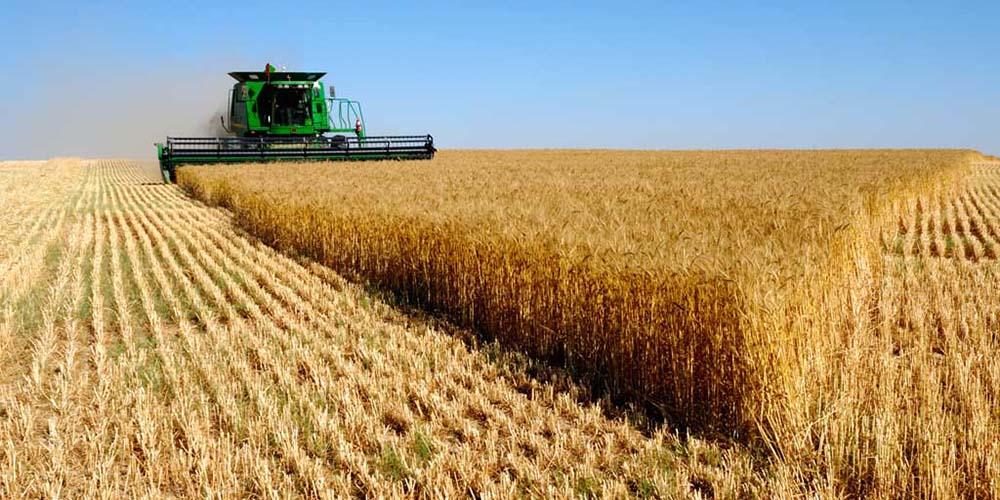 واحدهای تولیدی کشاورزی به طرح رونق تولید اضافه شدند