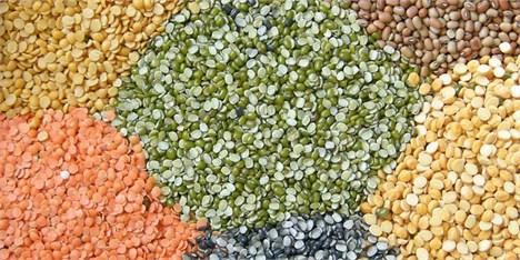 صادرات خوراک دام ۳۳ درصد رشد یافت