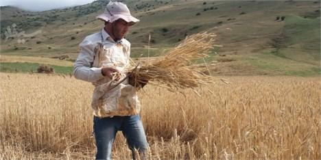 بلاتکلیفی کشاورزان با آغاز کشت پاییزه/ نرخ خرید تضمینی به کشاورزان اعلام نمیشود