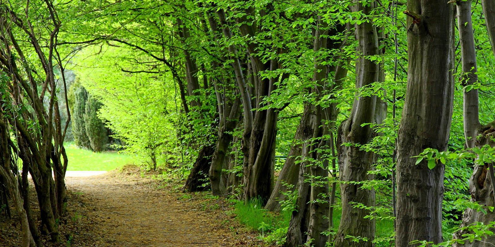 سطح زراعت چوب در برنامه ششم پنج برابر تعیین شد/سهم 40درصدی در تامین منابع سلولزی