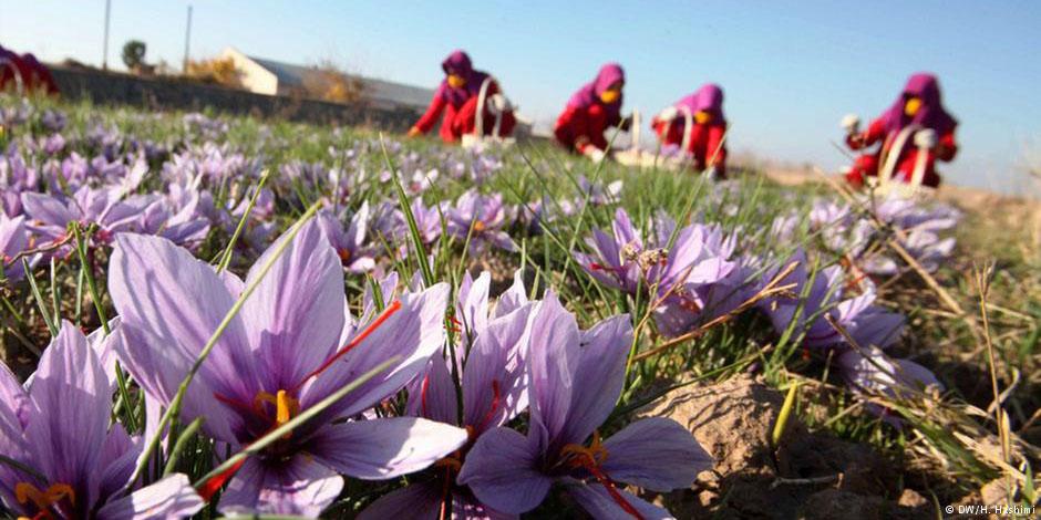 صادرات زعفران با بارکد چهار بعدی