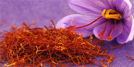 کاهش 20 درصدی قیمت زعفران در خراسان رضوی