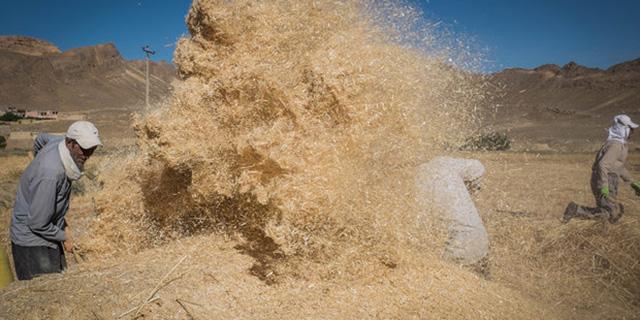 باوجود گذشت ۵ماه از آغاز سال زراعی، هنوز خبری از اعلام نرخ خرید تضمینی گندم نیست