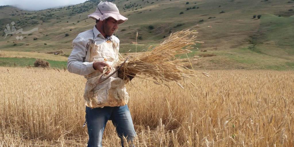 قیمت نان با اعلام نرخ خرید تضمینی گندم مشخص خواهد شد