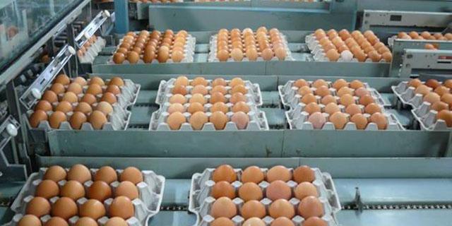 سازمان دامپزشکی: واردات تخم مرغ ادامه دارد