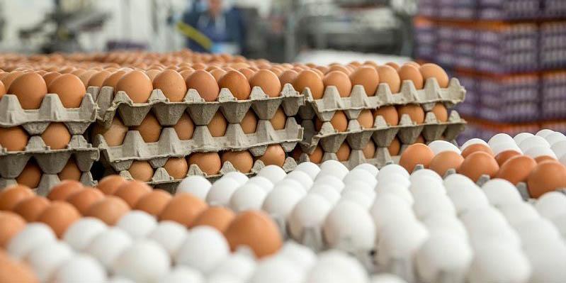 درج قیمت بر روی تخم مرغ، تنها راه حل کنترل بازار