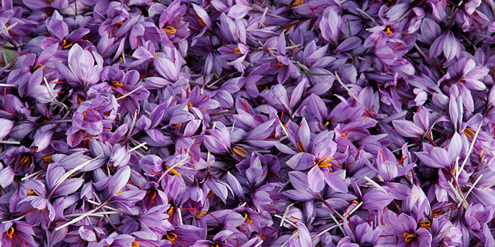 برای اولین بار زعفران در بورس کالا عرضه شد/ تامین 90 درصد زعفران دنیا با ایران است