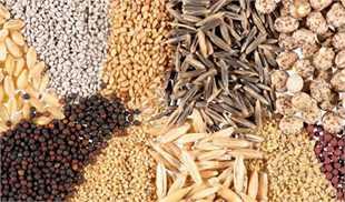 خرید خام نهادهها، عامل اصلی کاهش ظرفیت تولید کارخانههای خوراک