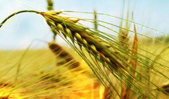 ایران به دنبال کشاورزی در خاک تاجیکستان