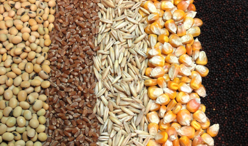 قیمتهای جهانی نهادههای دامی کاهش یافت/ هشدار درباره قاچاق خوراک دام