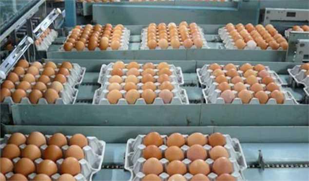قیمت تخممرغ با وجود مشکل حمل خوراک مرغ به ۸۰۰ تومان رسید