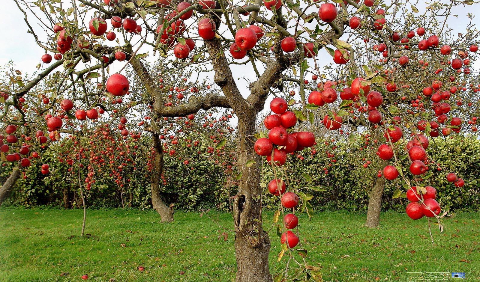 افزایش ۴۶ درصدی تورم تولیدکننده باغداری و دامداری