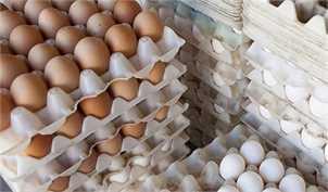 سیر صعودی تخم مرغ در بازار/ قیمت هر شانه تخم مرغ به 24 هزار تومان رسید