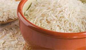 فعلا چارهای جز واردات برنج نداریم