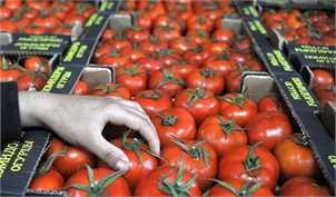 بزودی مجوز صادرات 15 درصد از گوجه فرنگی خارج از فصل ابلاغ میشود