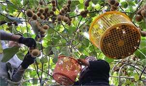 رئیس اتحادیه فروشندگان میوه و سبزی: بازار میوه عید آرام خواهد بود