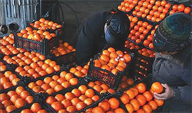 ضرورت ممنوعیت صادرات پرتقال
