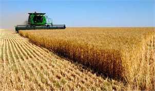 یک چهارم بودجه 98 به واردات نهادههای کشاورزی اختصاص دارد
