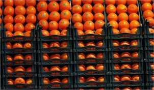 ذخیرهسازی میوه، قیمت پرتقال را بالا برد