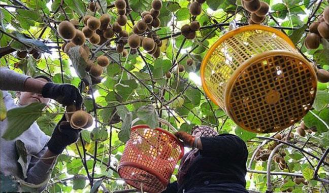 محصولات ایران سالمترین محصولات کشاورزی جهان هستند