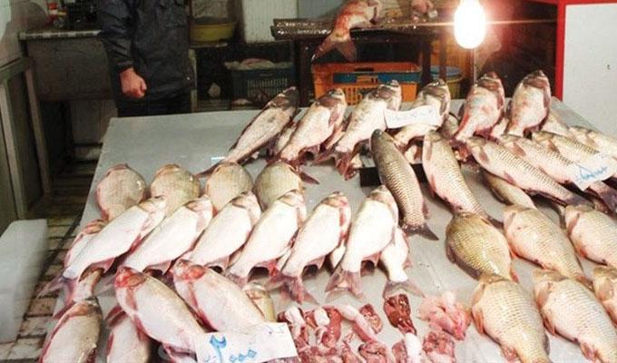 رشد هفت درصدی قیمت ماهی