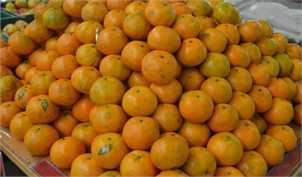 ممنوعیت صادرات سیب و پرتقال از 15 اسفند