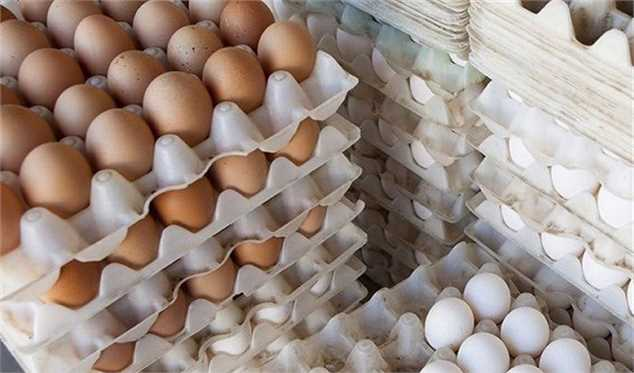 قیمت تخممرغ به زیر ۵ هزارتومان کاهش مییابد
