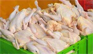 افزایش قیمت مرغ ناشی از سودجویی است