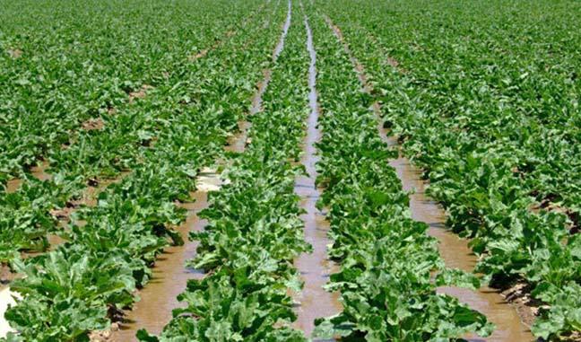 در جریان سیل اخیر بخش کشاورزی ۱۳هزار میلیارد تومان خسارت دیده است