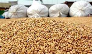 واردات بیش از ۸۰۰۰۰۰۰ تن ذرت دامی درسال 97