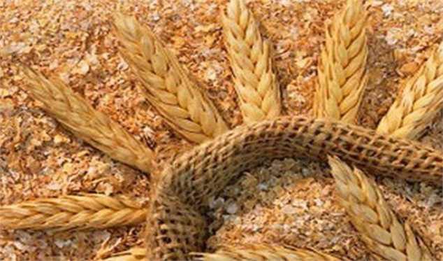 قیمت سبوس گندم 1250 تومان تعیین شد