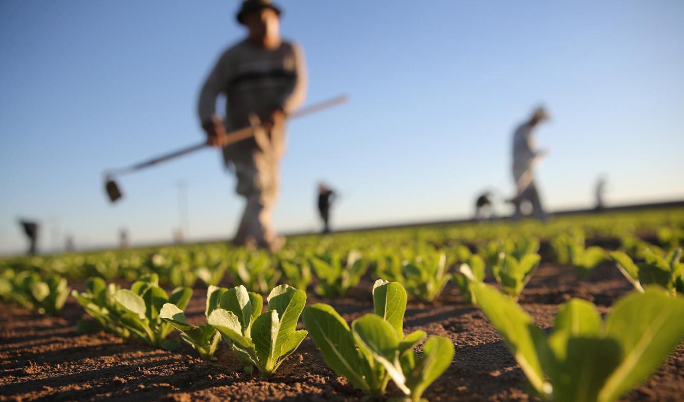 چشمانداز ۲۰۱۹ کشاورزی جهان