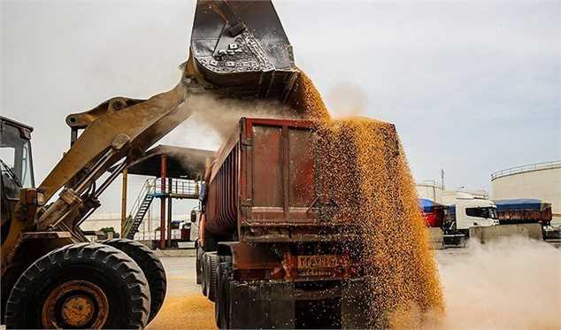 جولان دلالان در بازار خرید گندم/ چرا کشاورزان گندم به دولت تحویل نمیدهند؟