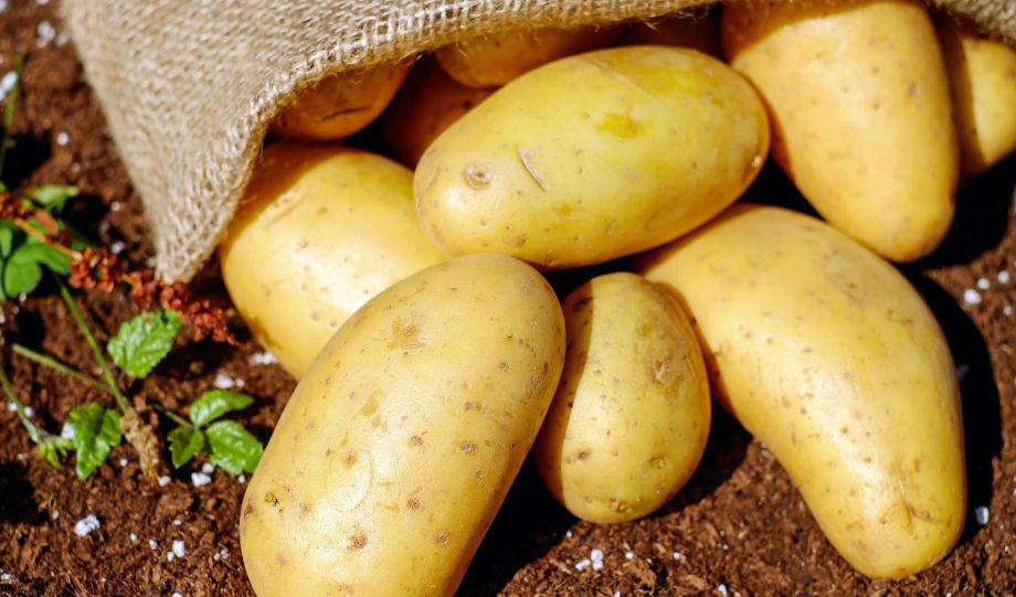 قیمت سیب زمینی در هفتههای آتی شکسته میشود
