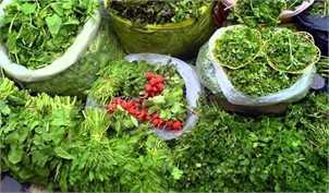 اختلاف عجیب قیمت انواع سبزی و صیفیجات در سازمان میادین با اتحادیه بارفروشان میوه و ترهبار