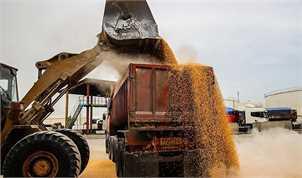 افزایش قیمت خرید تضمینی گندم منتفی است