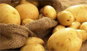 آغاز برداشت زودهنگام سیبزمینی در اردبیل/ تهدید جدی خودکفایی بخاطر قیمت بالای بازار