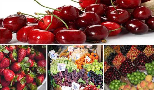 پیش بینی کاهش نرخ میوههای تابستانه در بازار/ کمبودی در عرضه میوههای باغی وجود ندارد