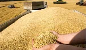 قاچاق گندم توجیه اقتصادی ندارد