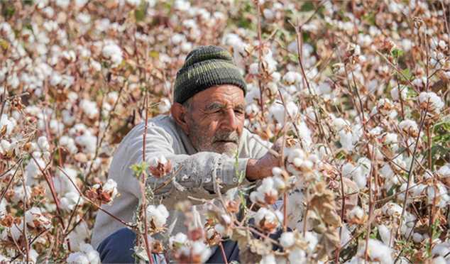 ایران در تولید طلای سفید خودکفا میشود