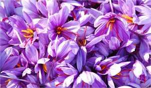 کاهش قیمت زعفران در بازار / افت ۱۵ درصدی صادرات